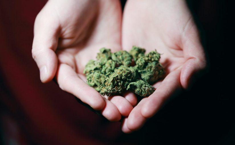 Nasiona marihuany: hit najbliższych lat, który warto poznać